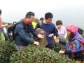2010年4月14日陕南茶之旅